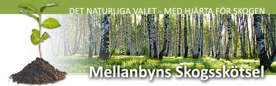 skogstjänster, Mellanbyns Skogsskötsel, Edsbyn