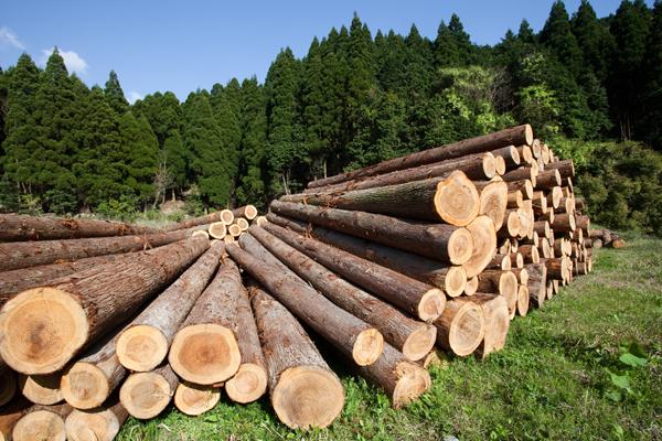 skogsarbeten